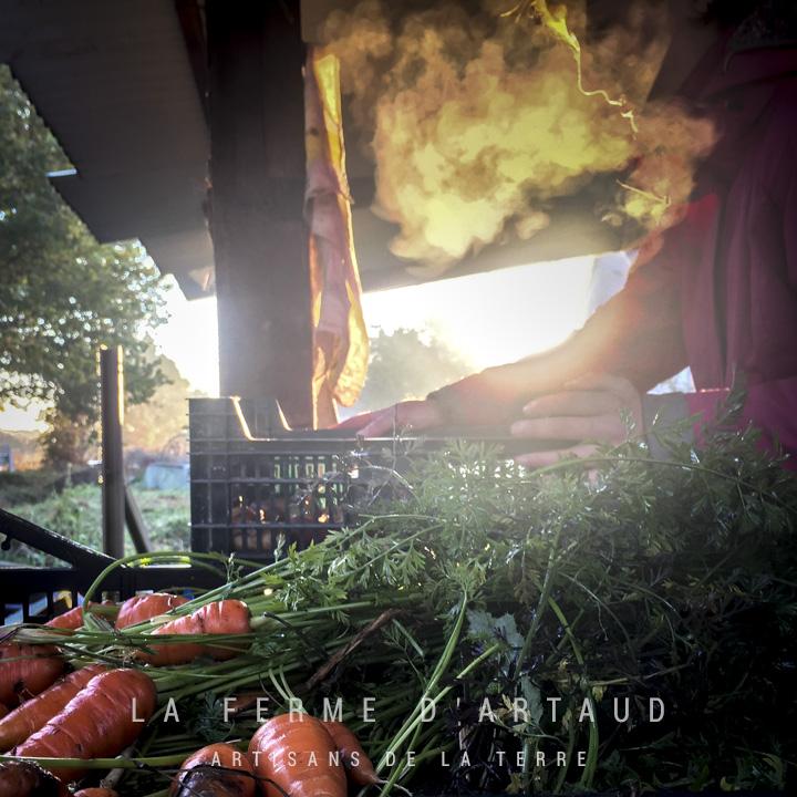 cultiver-des-legumes